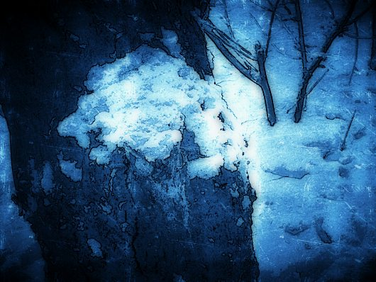 mysterious winter forest
